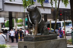 The Hachinko statue, and an evil cat