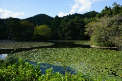 The pond at Ryoanji Temple