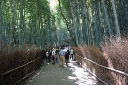 The path through the bamboo grove