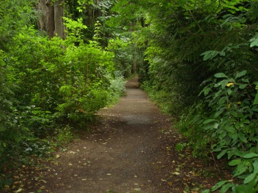 Walking the trail through Discovery Park