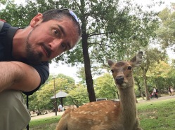 Hanging out with the deer in Nara