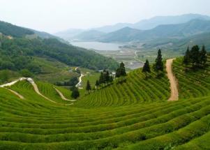 Korea Boseong