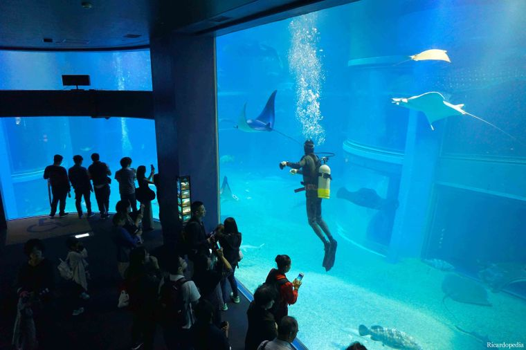 Japan Osaka Aquarium