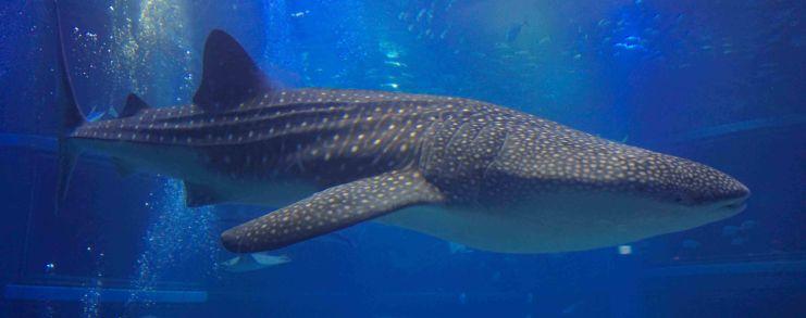 Japan Osaka Aquarium