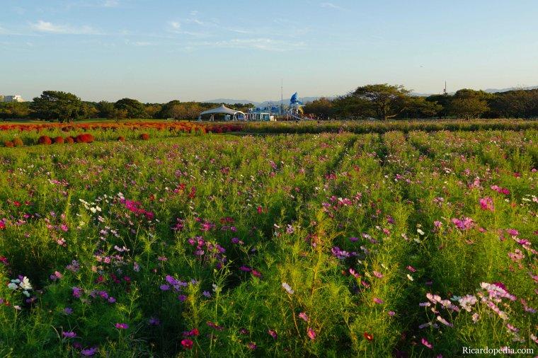 Japan Fukuoka Uminonakamichi Seaside Park