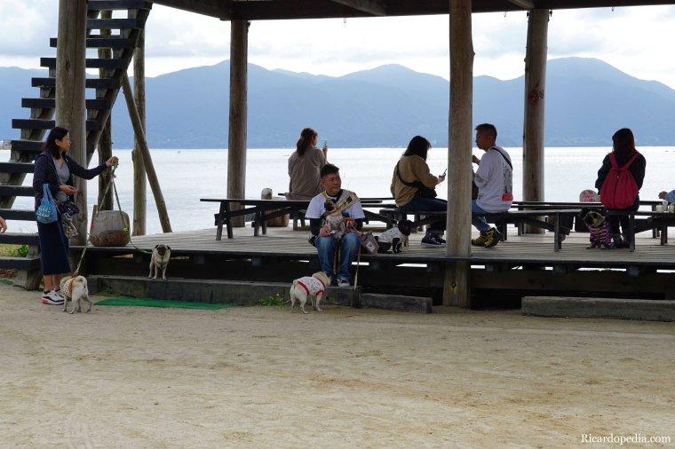 Japan Itoshima Pugs