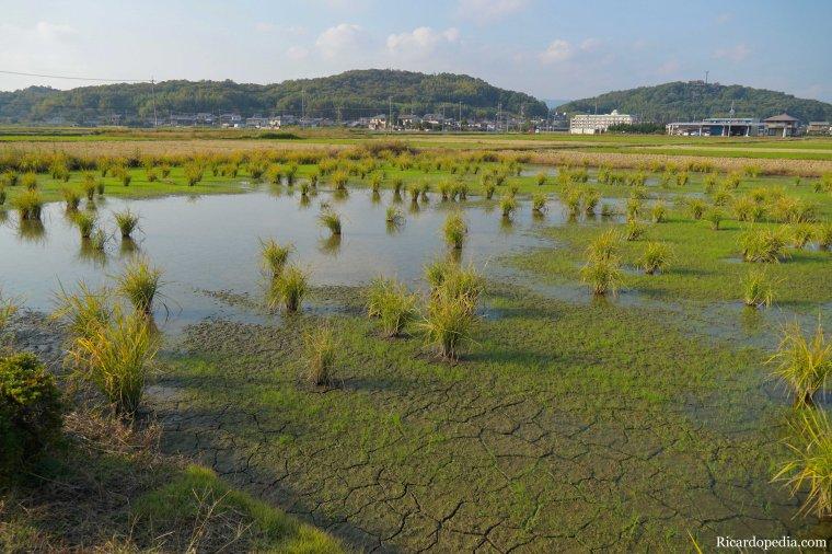 Japan Okayama Bicycling Kibi Plain