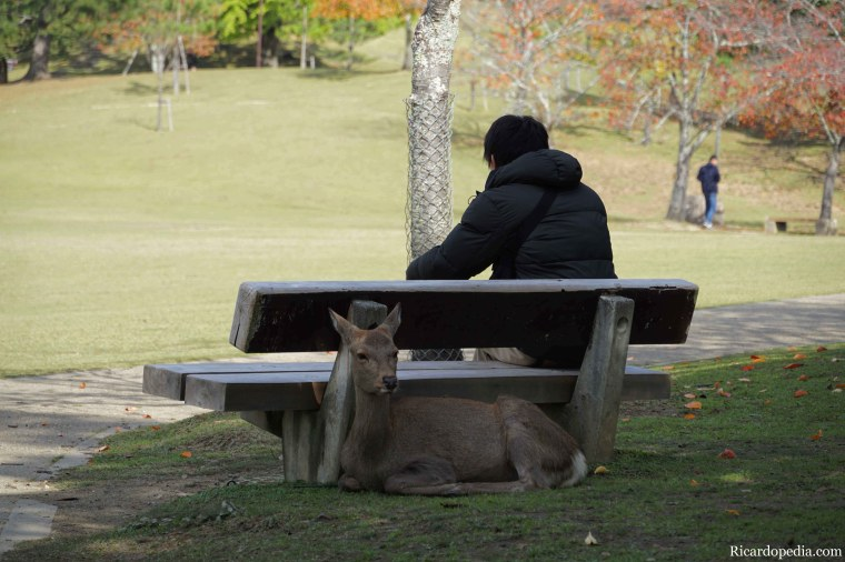 Japan Nara Deer